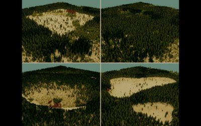 Guided Ecological Simulation For Artistic Editing of Plant Distributions In Natural Scenes