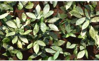 Image-Based Reconstruction and Synthesis of Dense Foliage